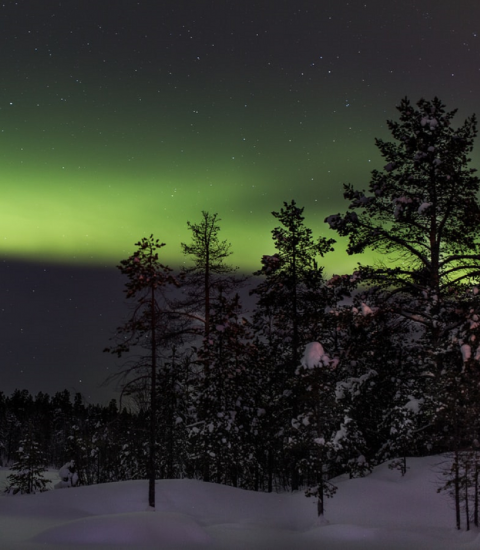 Official Statistics: Northern Lights above snow and trees in Finland